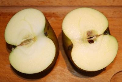 Applecores