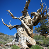SAP and Bristlecone Partner on a Fixed-Price Spend Performance Management Bundle (Part 1)