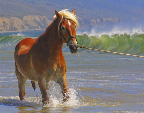 On Changing horses: Open Source Licenses, Foundations and The Software Freedom Conservancy