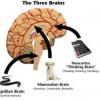 The Brains Behind Digital Marketing