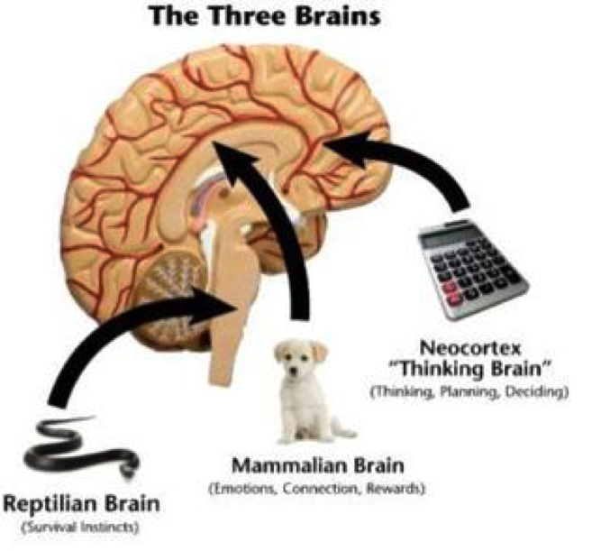 three_brains